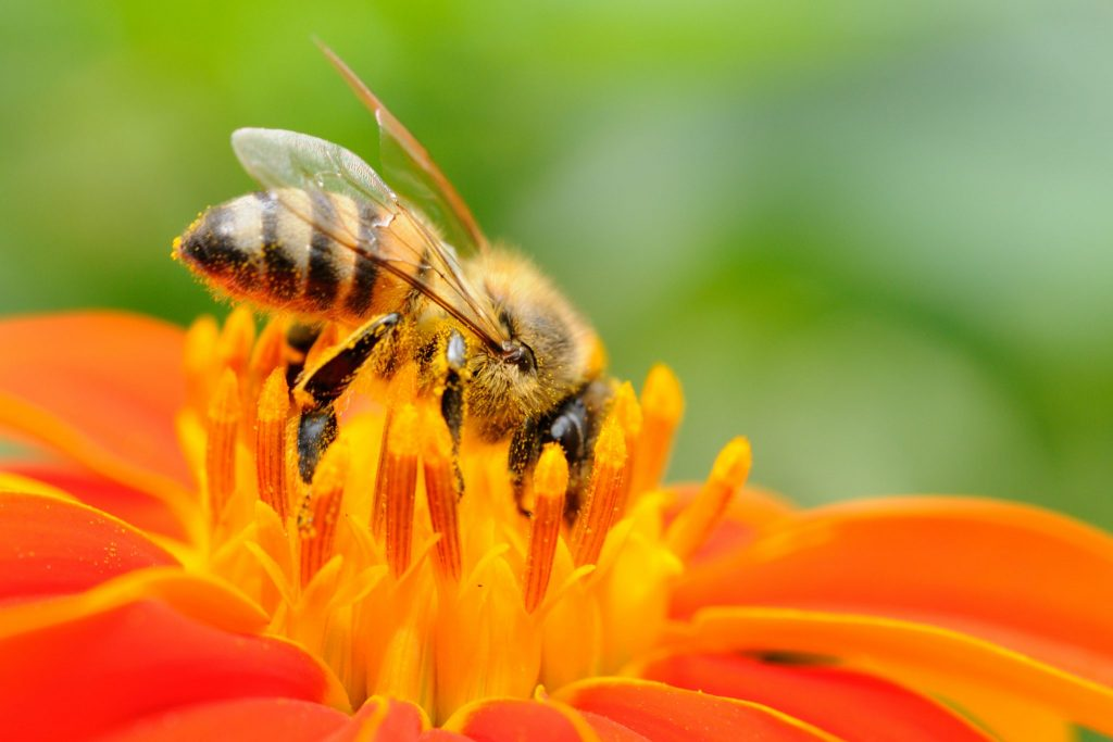 Read more on Bees in BC